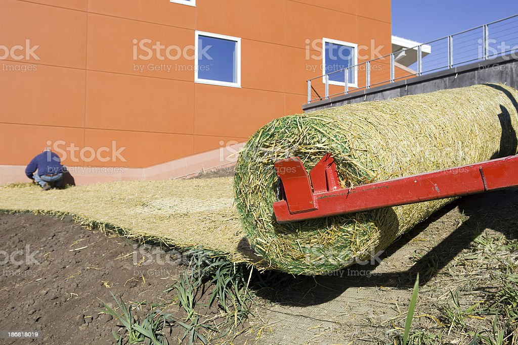 Worker Securing Rolled Straw Mat to Prevent Seed Erosion stock photo