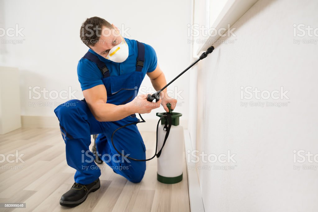 Worker Spraying Pesticide On Window Corner stock photo