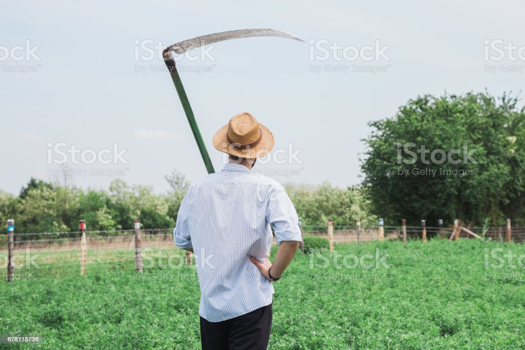 Worker with a reaper  in the field stock photo