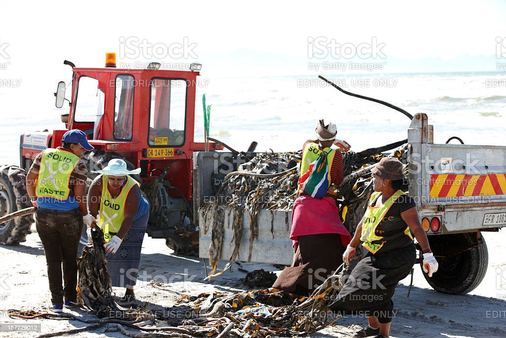 Workers clearing kelp off South African beach royalty-free stock photo