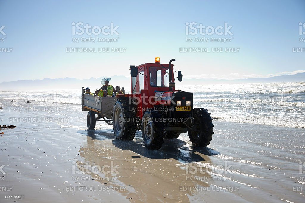 Workers clearing kelp off South African beach stock photo