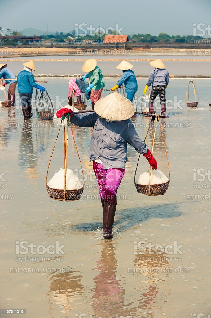 Workers collect salt in salt farm stock photo