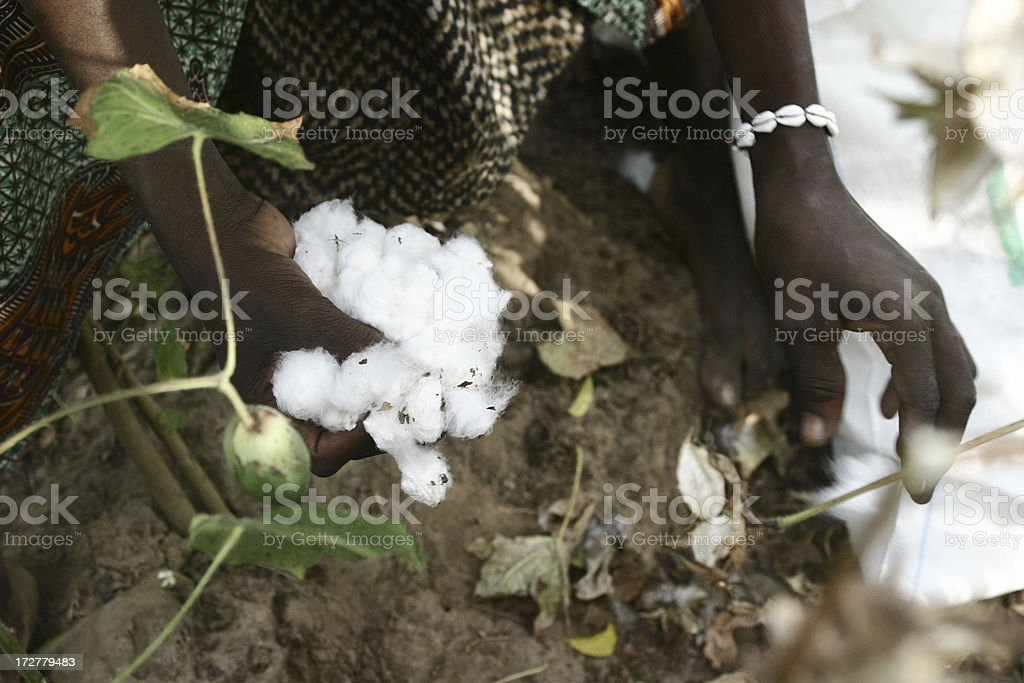 Workers Cotton royalty-free stock photo