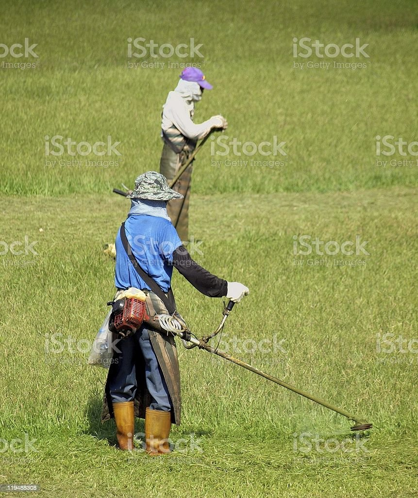 Workers Cutting Grass with Trimmers stock photo
