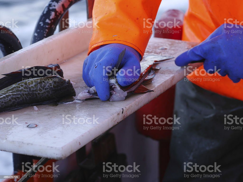 worker's hands cutting fish stock photo
