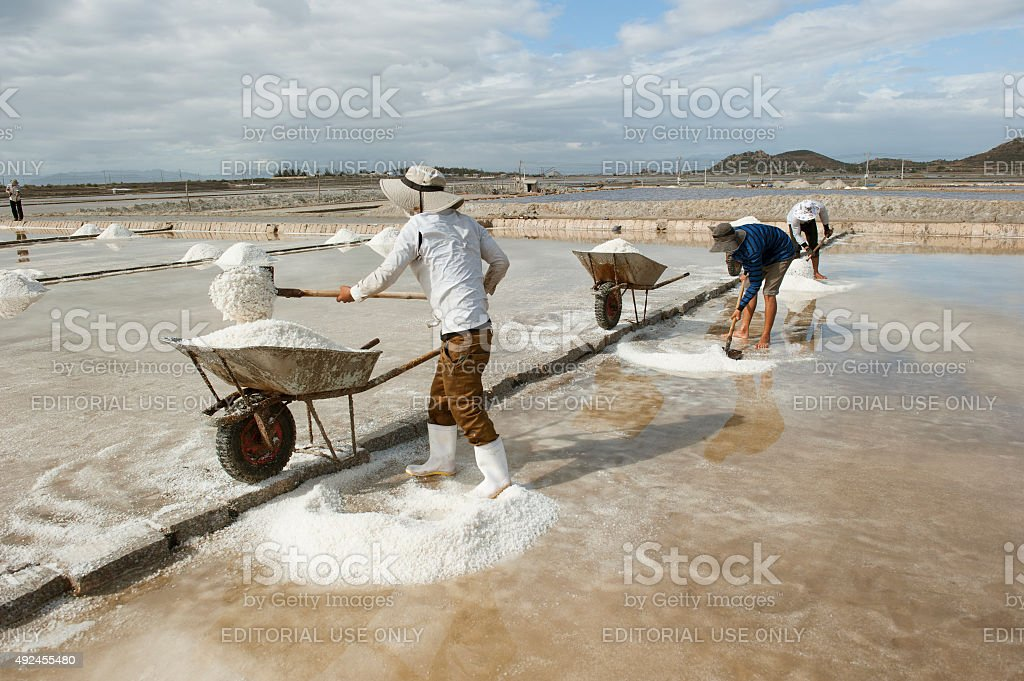 Workers harvesting salt stock photo