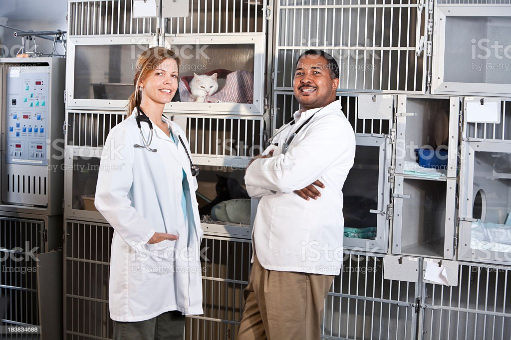 Workers in animal clinic stock photo