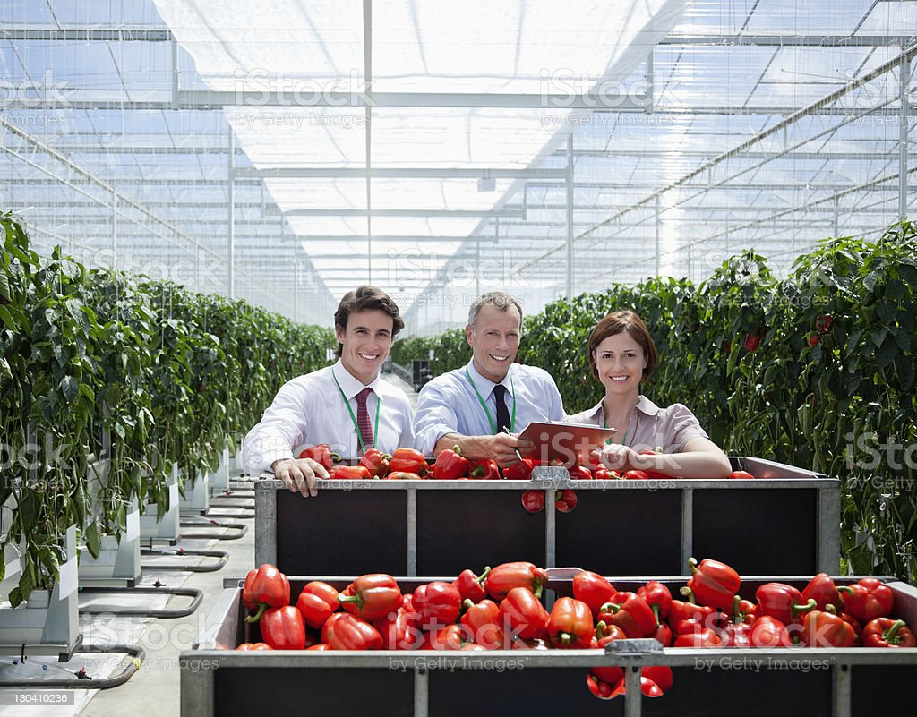 Workers in greenhouse standing with produce royalty-free stock photo