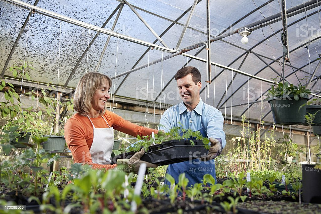 Workers in plant nursery royalty-free stock photo