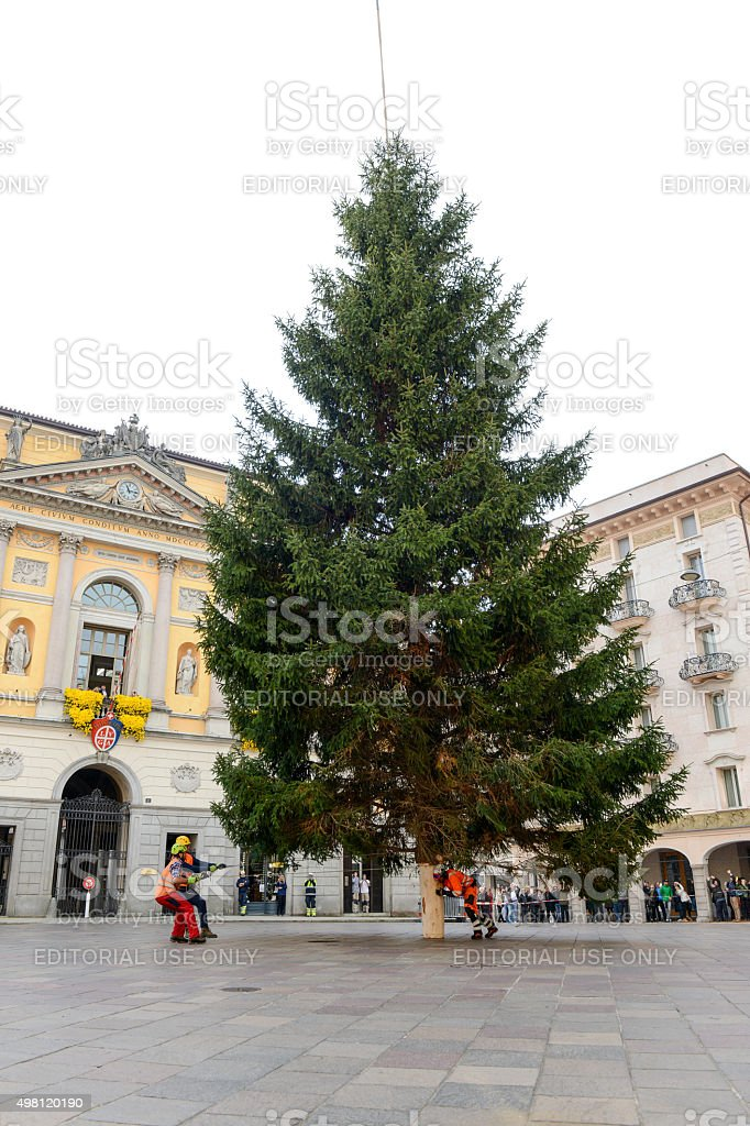 Workers move a Christmas tree stock photo