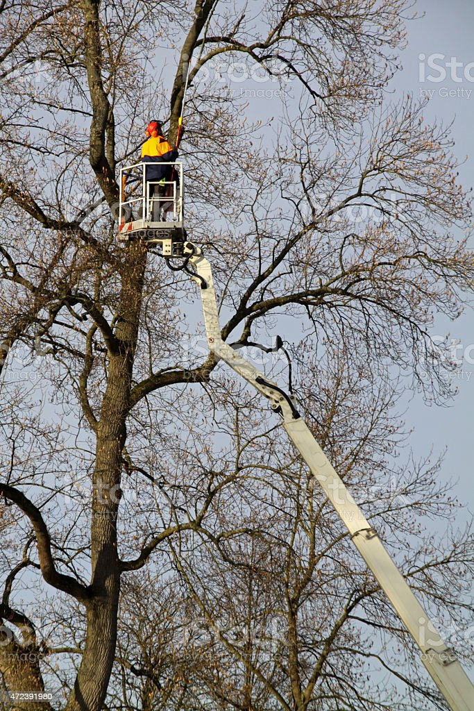 Workers Pruning stock photo