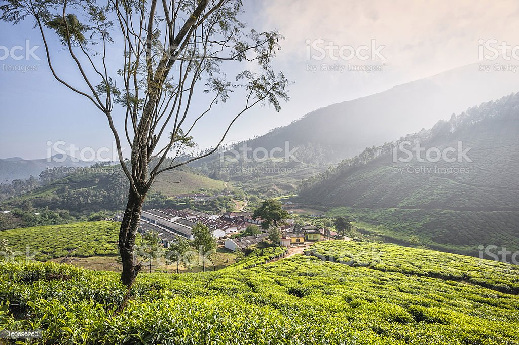 workers' residential area, tea plantation, Munnar, Kerala, India. royalty-free stock photo
