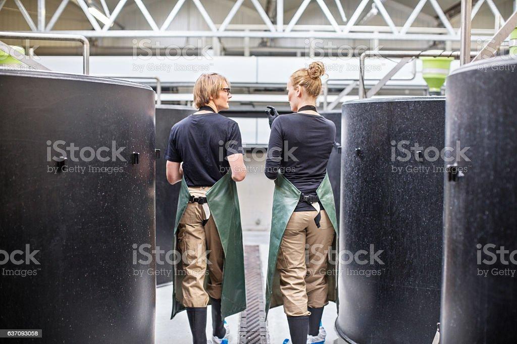 Workers walking through fish hatchery tanks stock photo