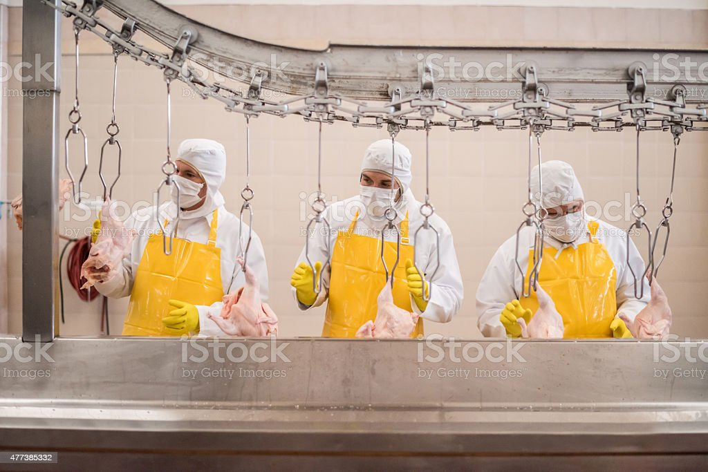 Workers working at a chicken factory stock photo