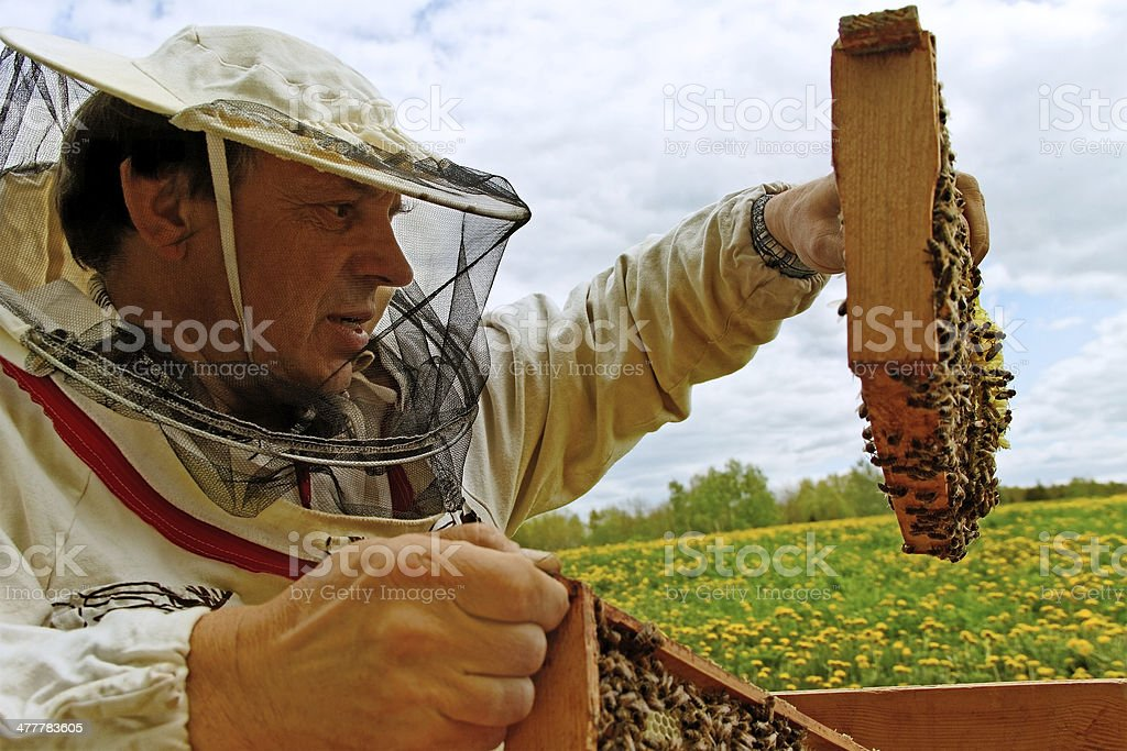 Working apiarist. royalty-free stock photo