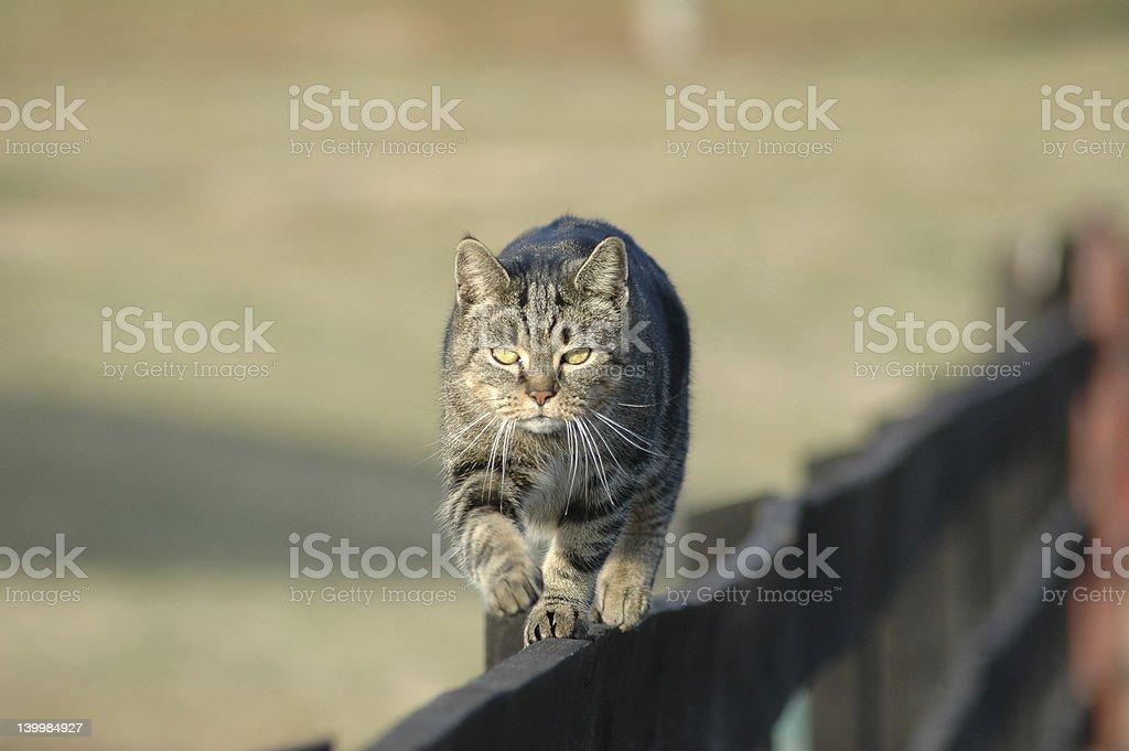 Working Barn Cat stock photo