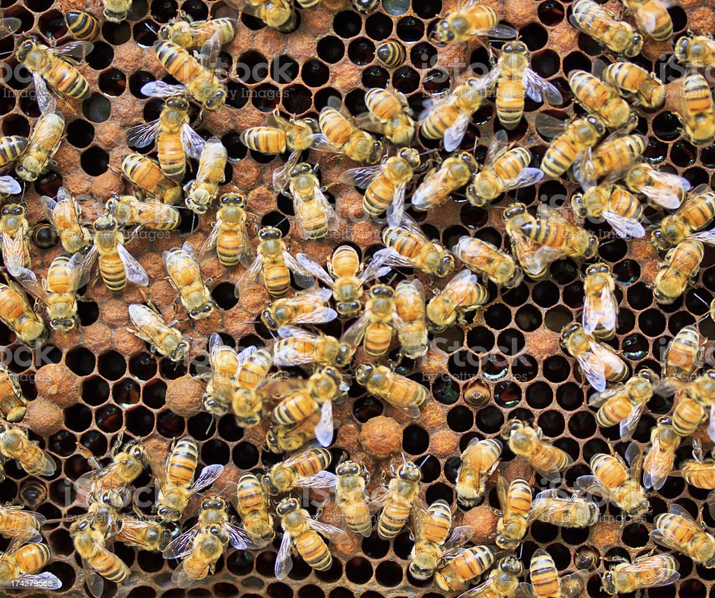 Working bee at their beehives royalty-free stock photo