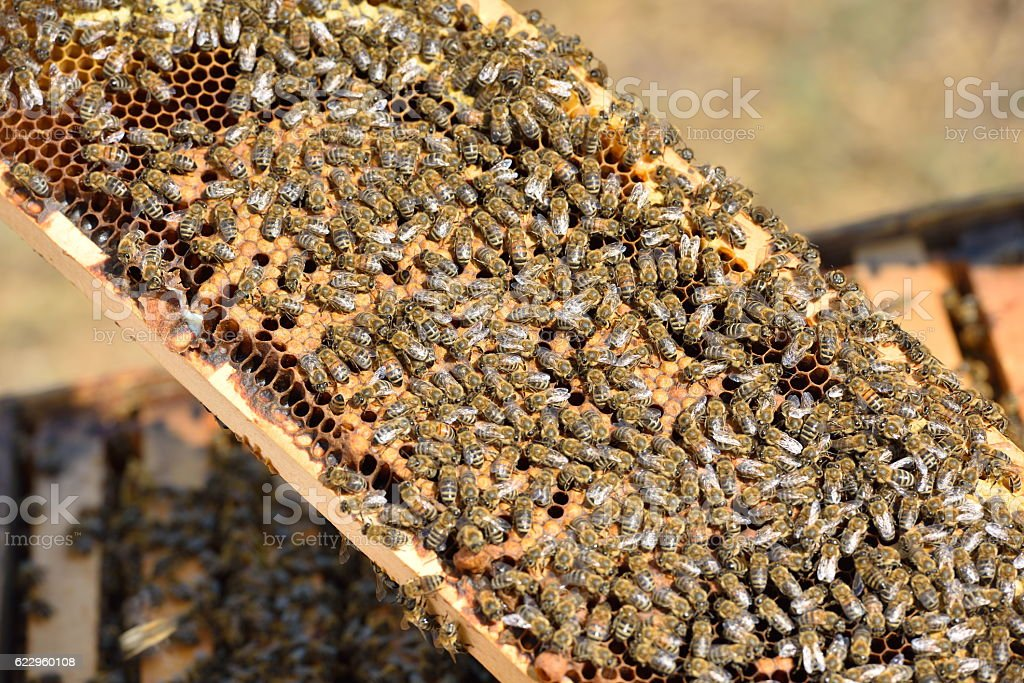 working bees on honeycomb stock photo