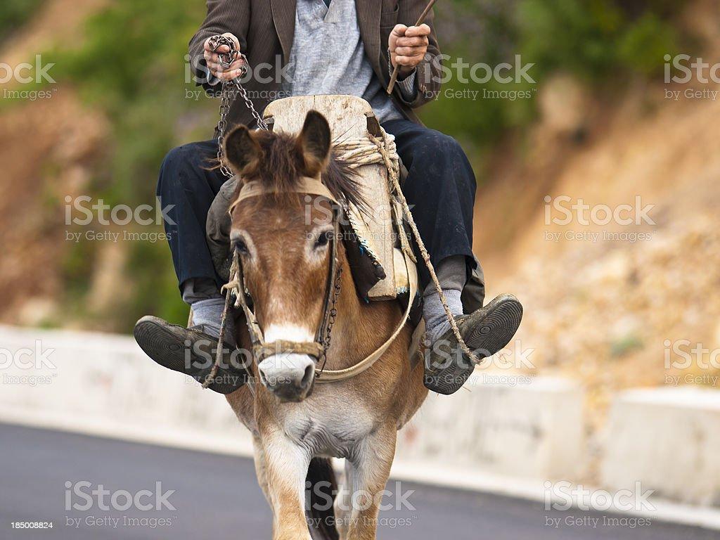 Working donkey stock photo