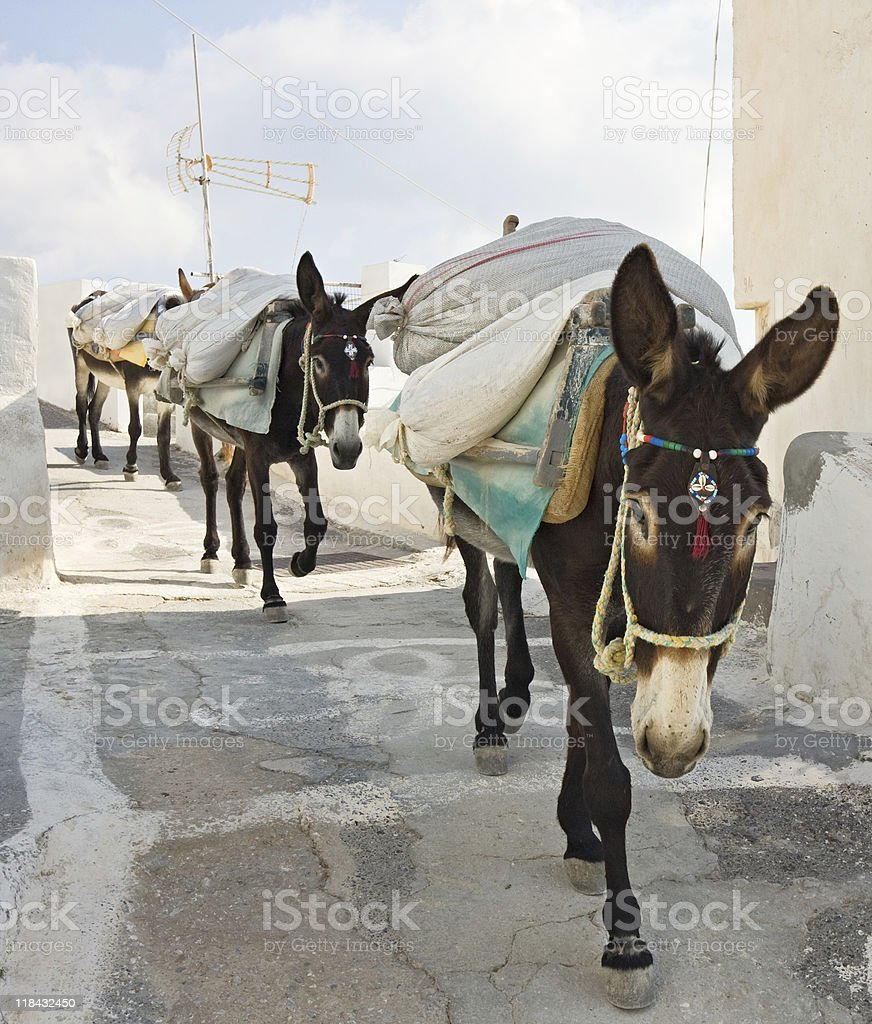Working donkeys stock photo