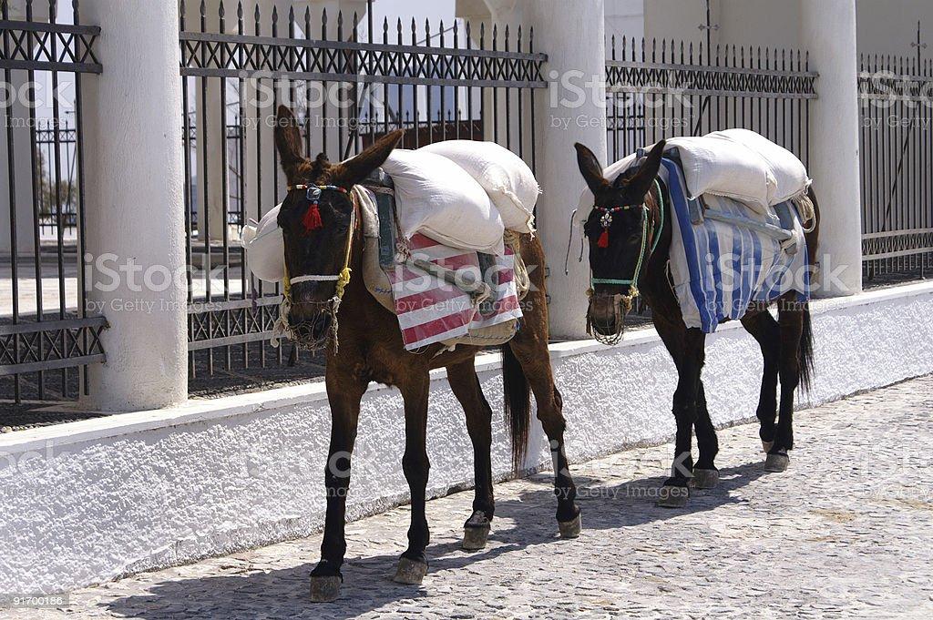 Working donkeys royalty-free stock photo