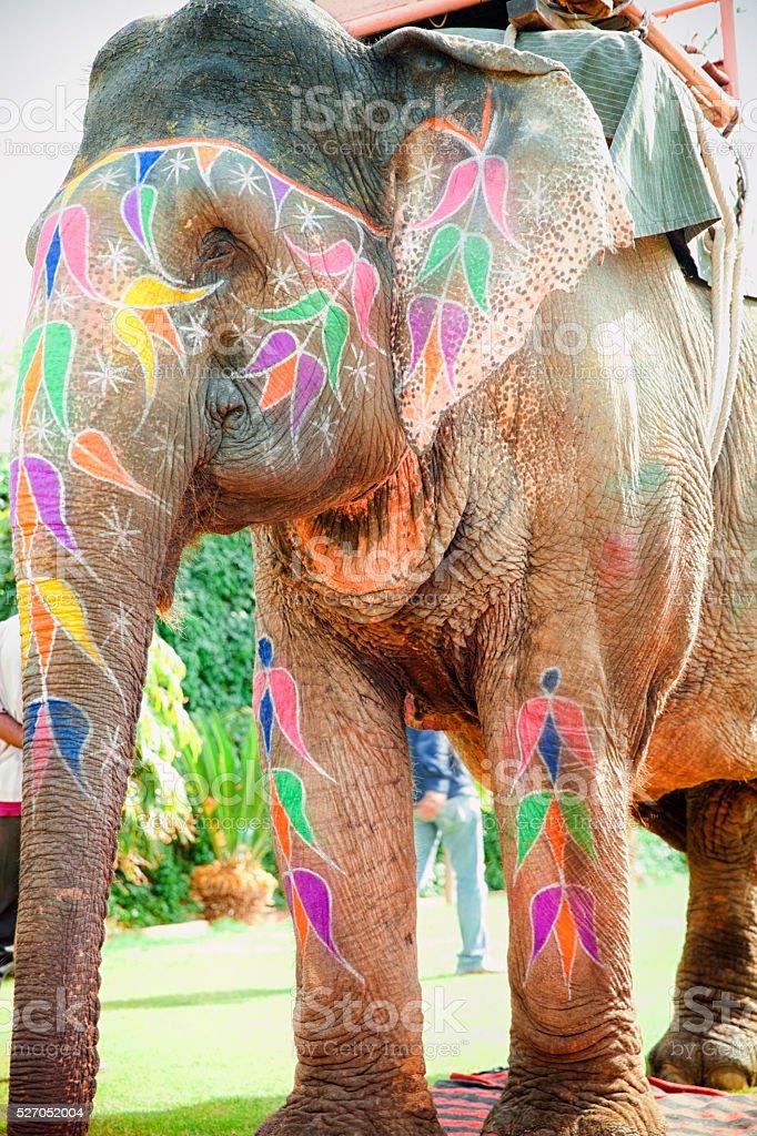 Working Elephant stock photo