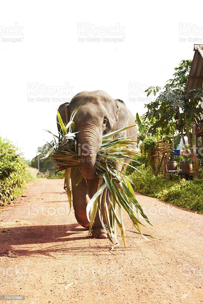 Working elephant - Thailand royalty-free stock photo