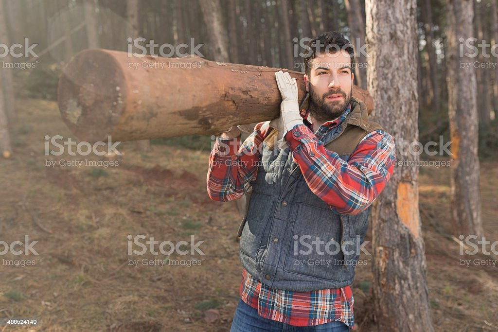 Working hard in the forest stock photo