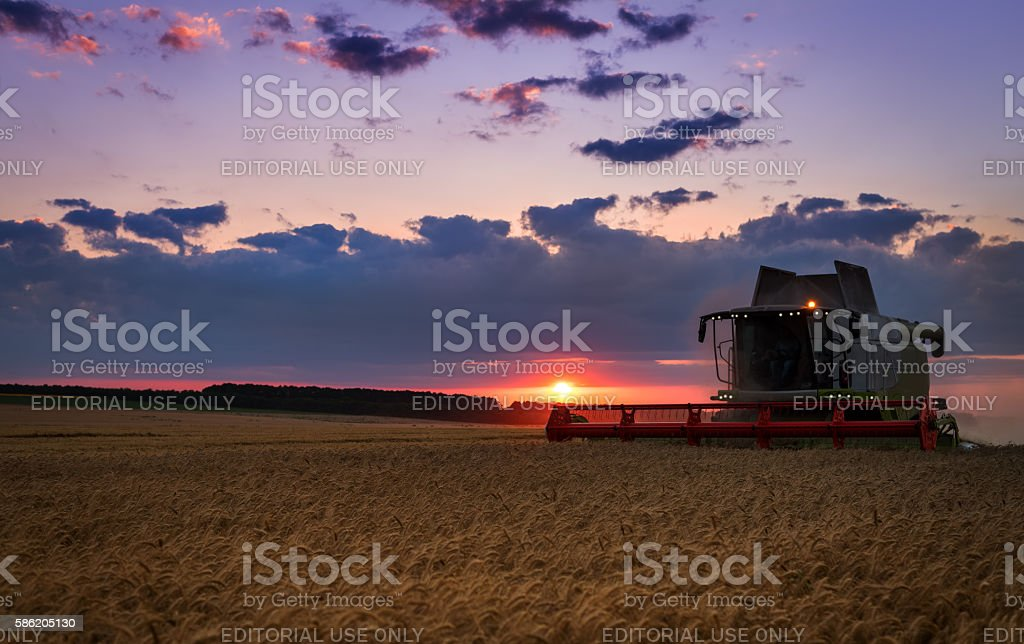 Working Harvesting Combine in the Field of Wheat stock photo