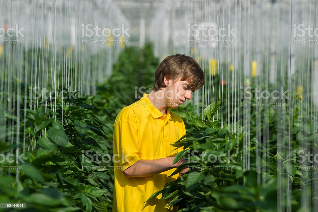 Working in a glasshouse royalty-free stock photo