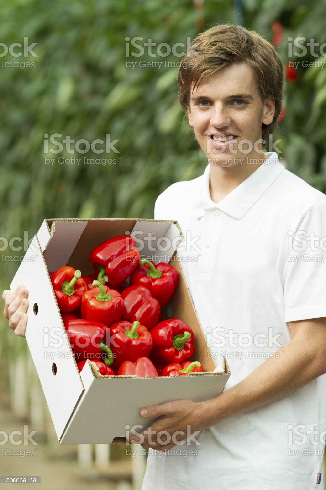 Working in a glasshouse, showing organic food royalty-free stock photo