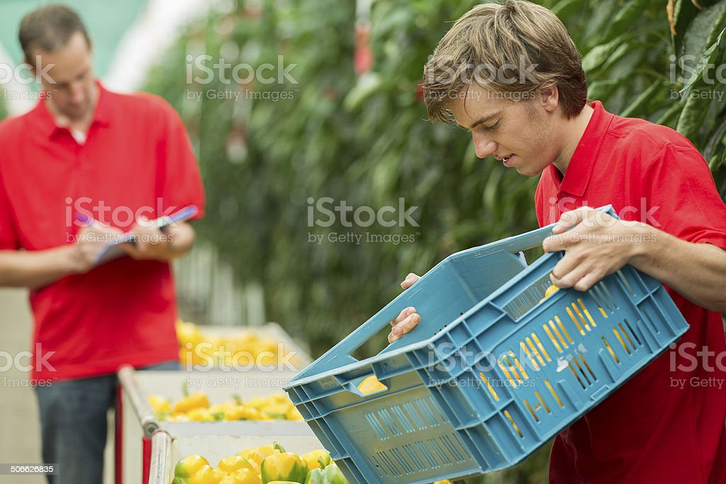 Working in a glasshouse, trainee royalty-free stock photo