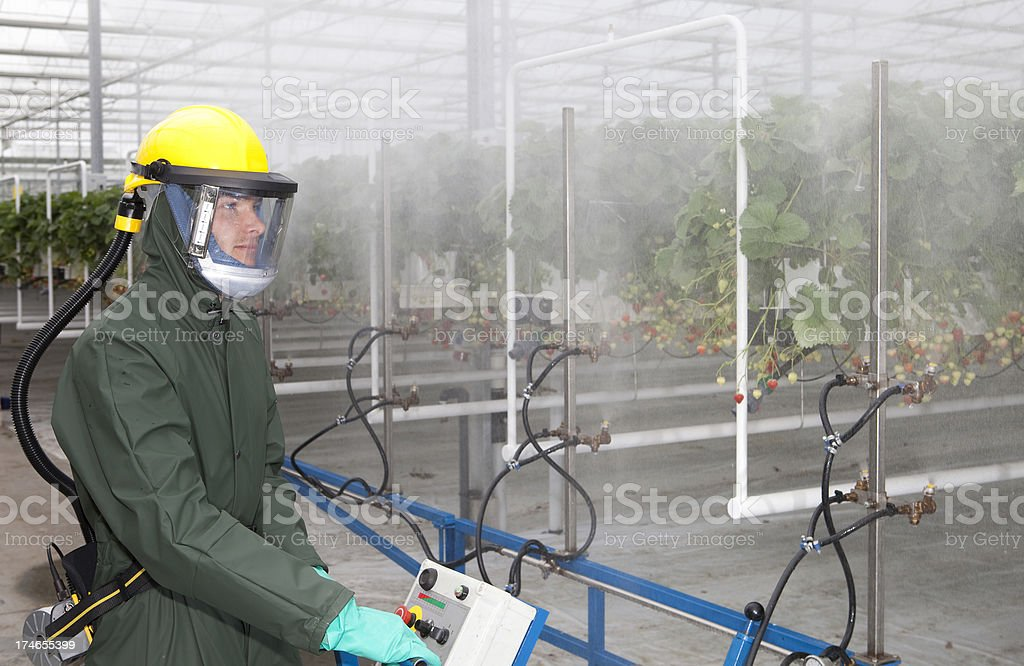 Working in a glasshouse with insecticide. stock photo