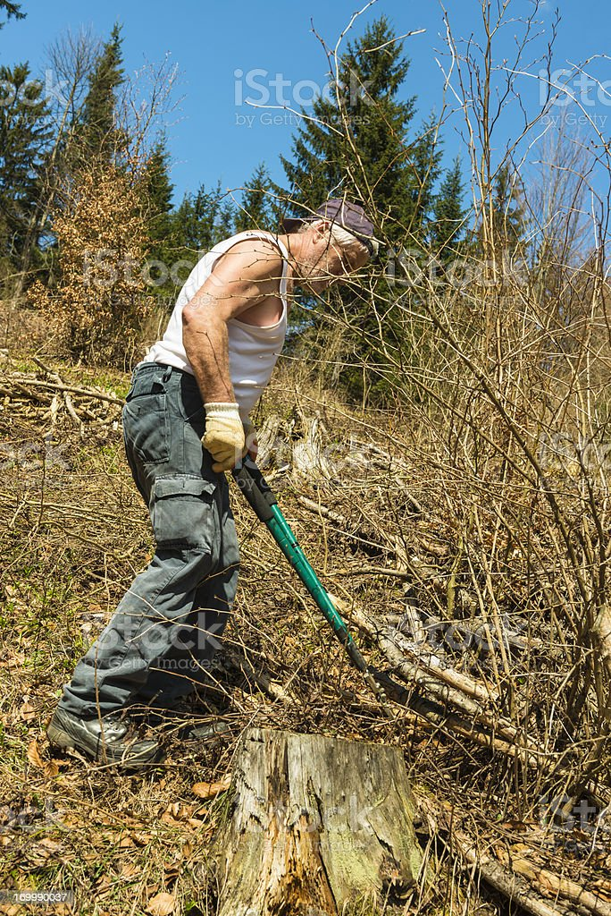 Working in forest royalty-free stock photo