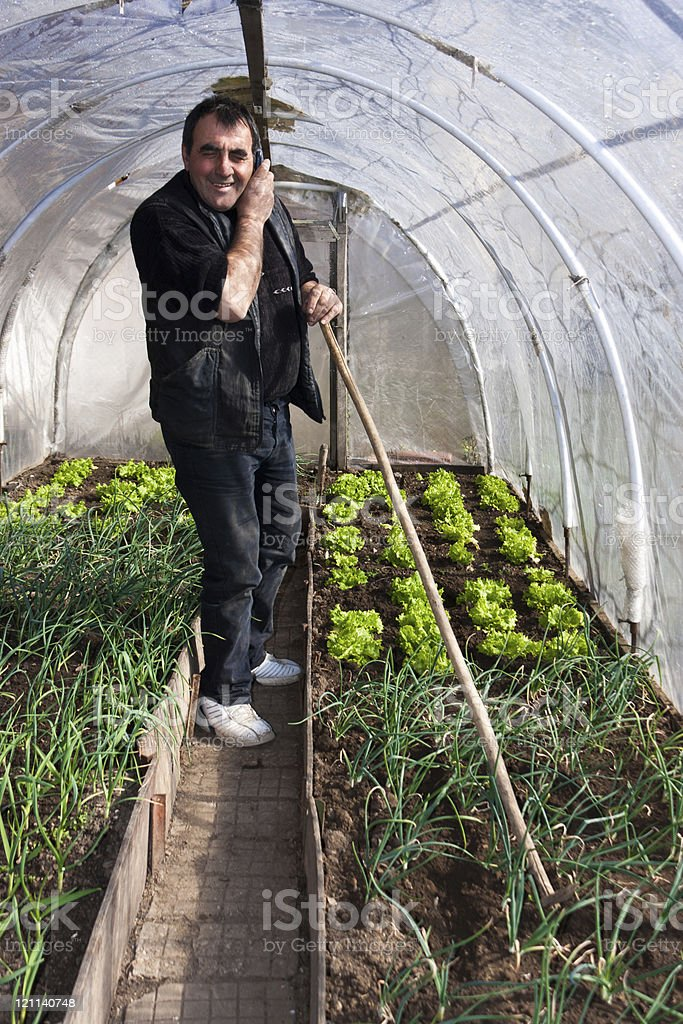 Working in real greenhouse royalty-free stock photo