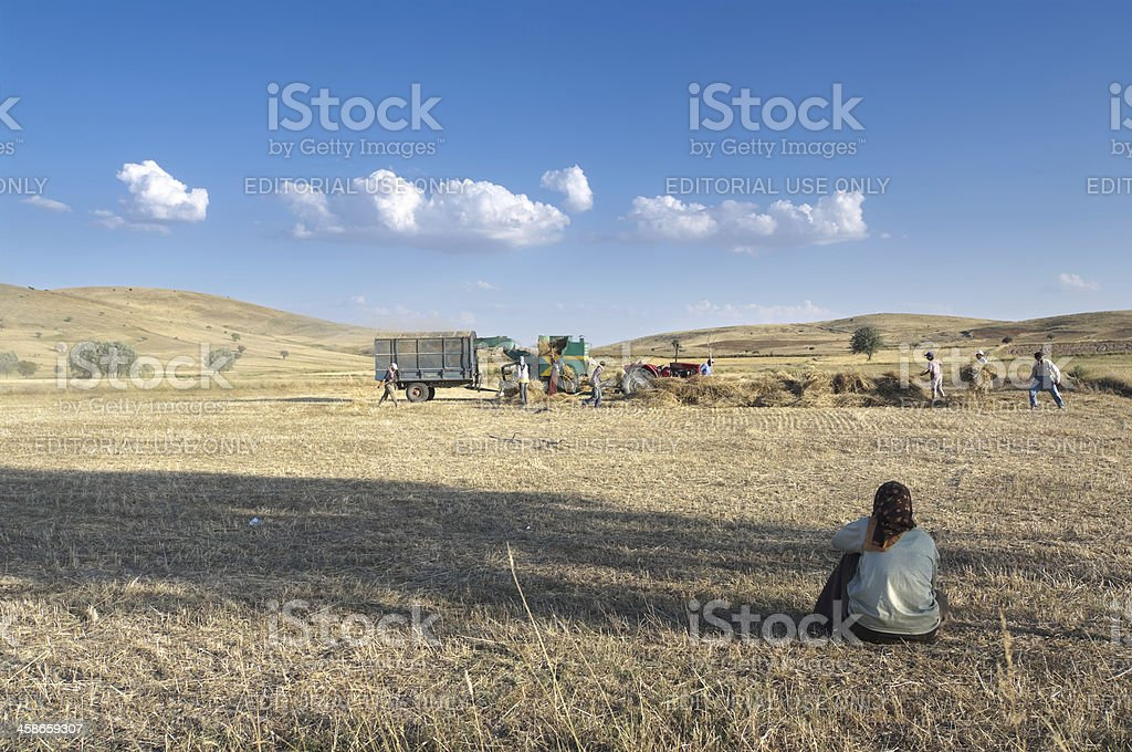 Working In The Fields Of Turkey royalty-free stock photo