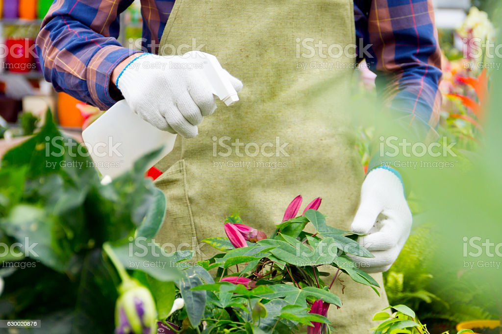Working in the greenhouse stock photo