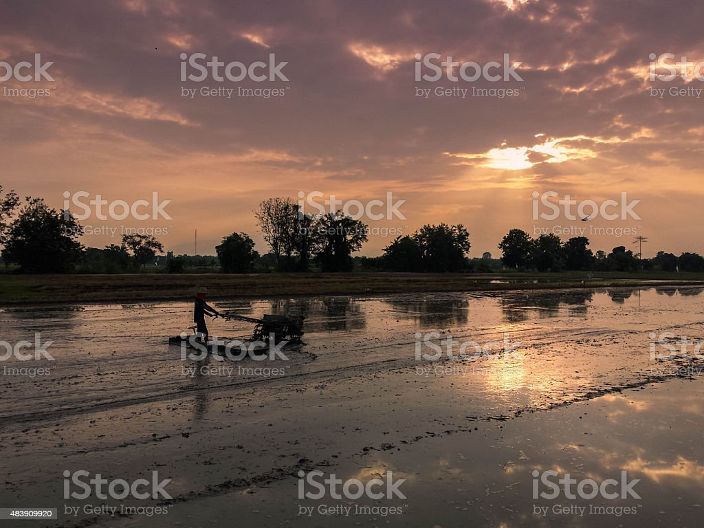 Working the fields at sunrise in Thailand royalty-free stock photo