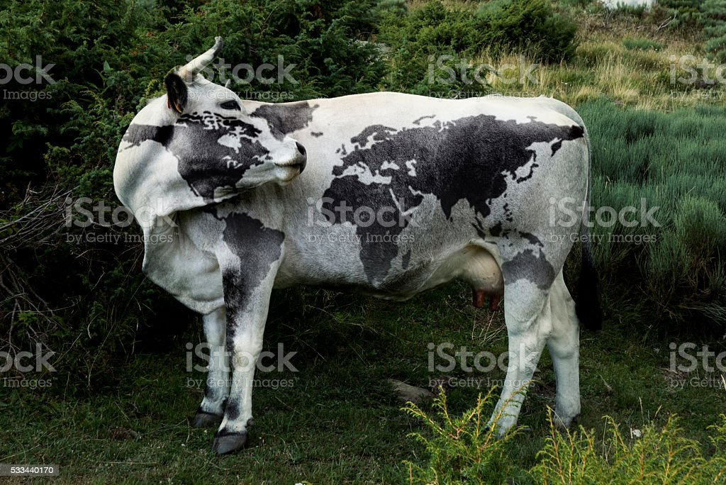 World cow map. stock photo