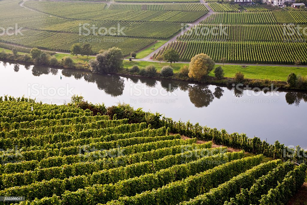 world famous sinuosity at the river Mosel near Trittenheim with stock photo