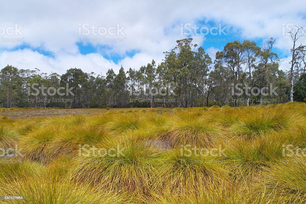 World heritage cradle mountain button grass plains stock photo