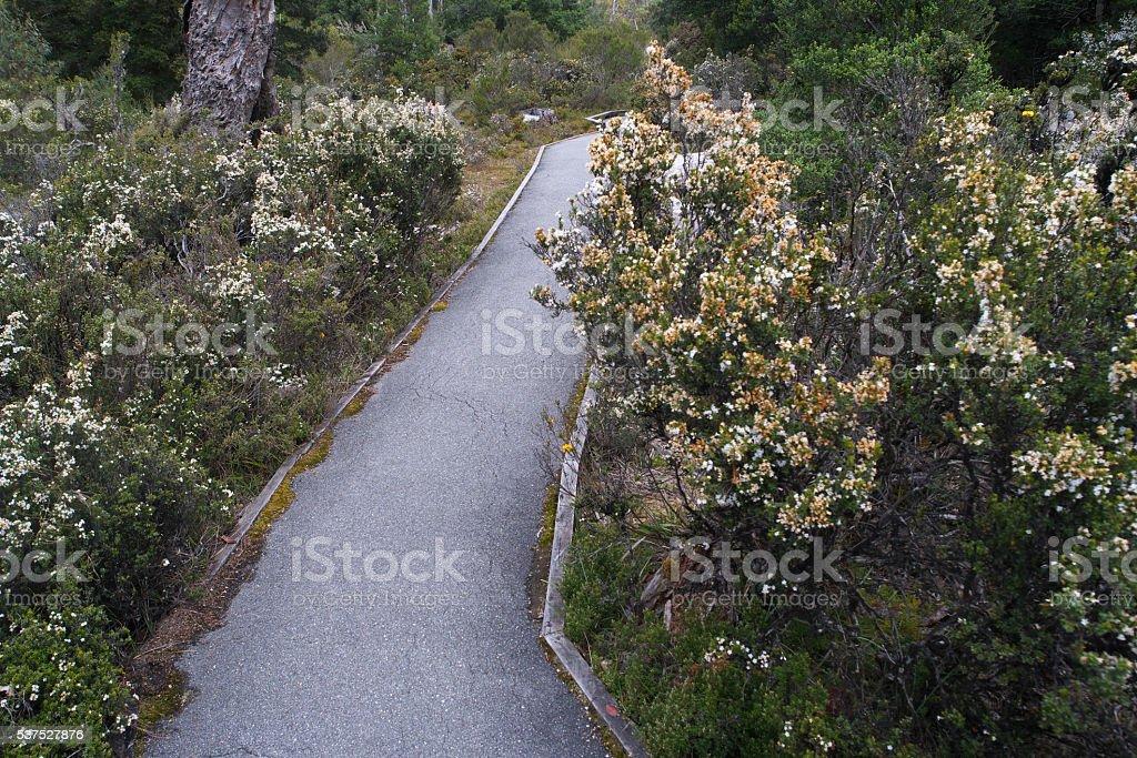 World heritage cradle mountain wildflowers in bloom stock photo
