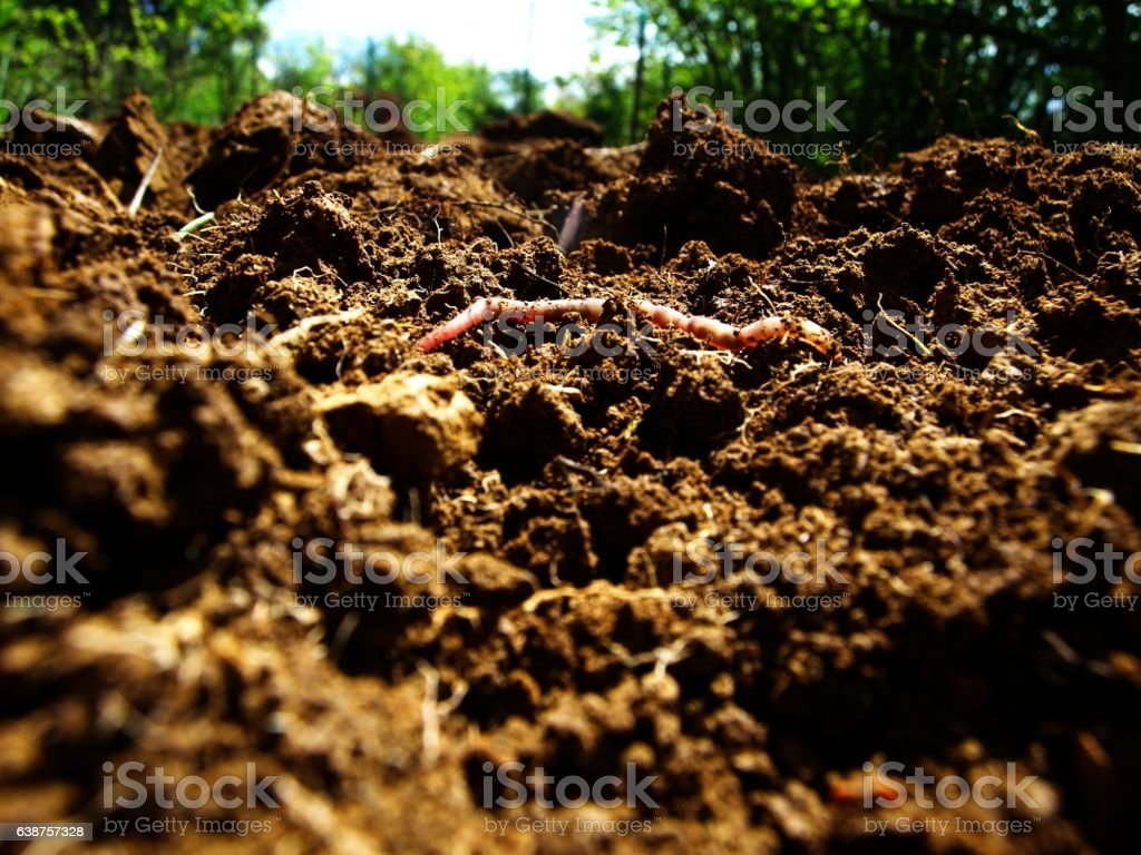 Worm comes up from the earth stock photo