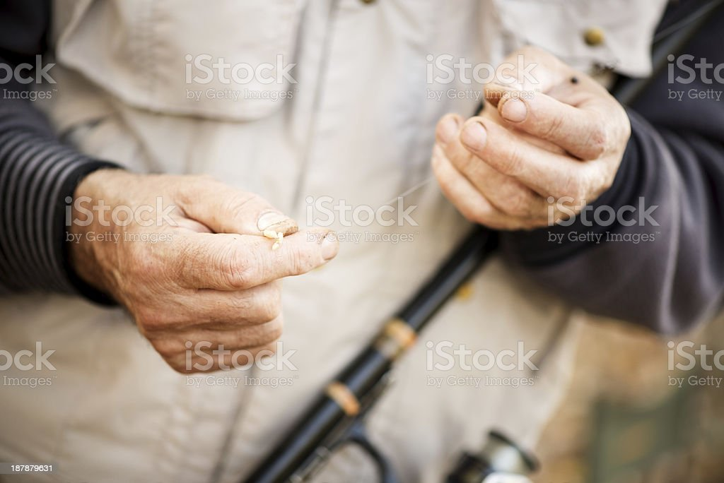 Worm on a fishing hook stock photo
