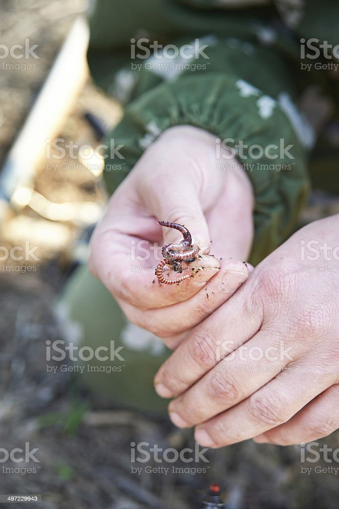 Worm on a hook royalty-free stock photo