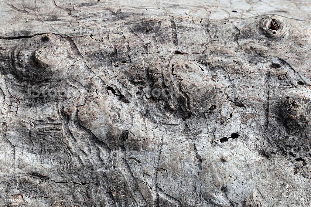Worm tracks, Tree trunk texture damage stock photo