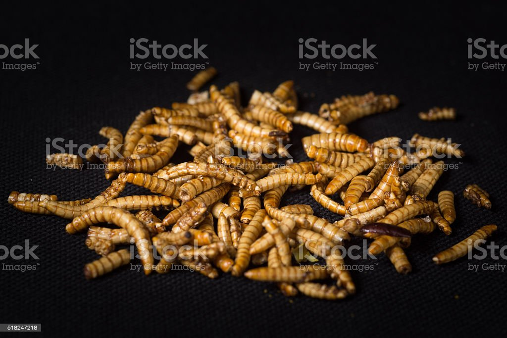 Worms as food in packshot stock photo