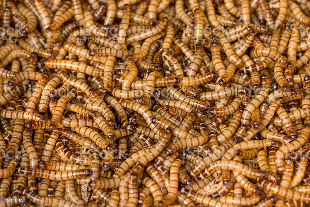 worms close up stock photo