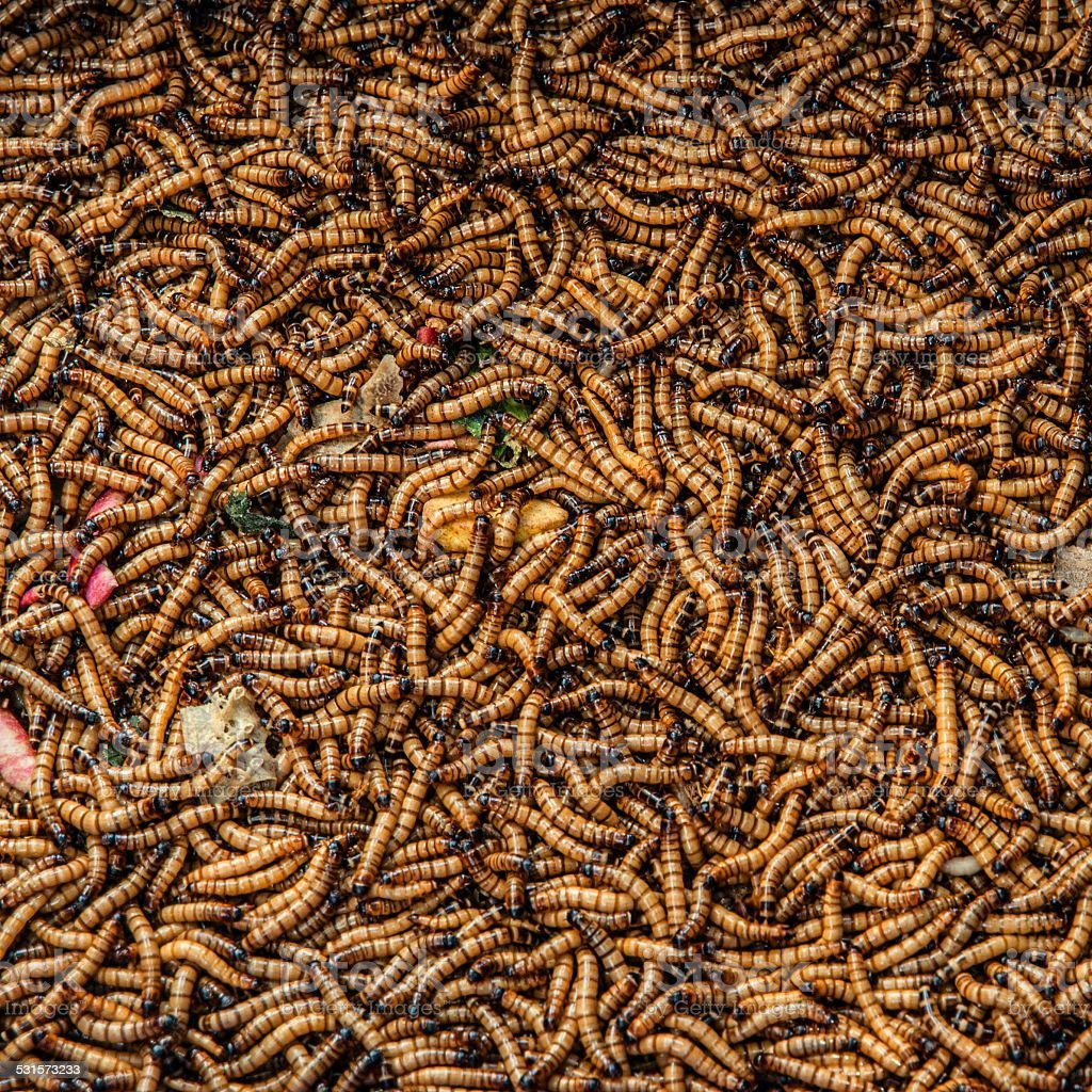 Worms in animal market stock photo