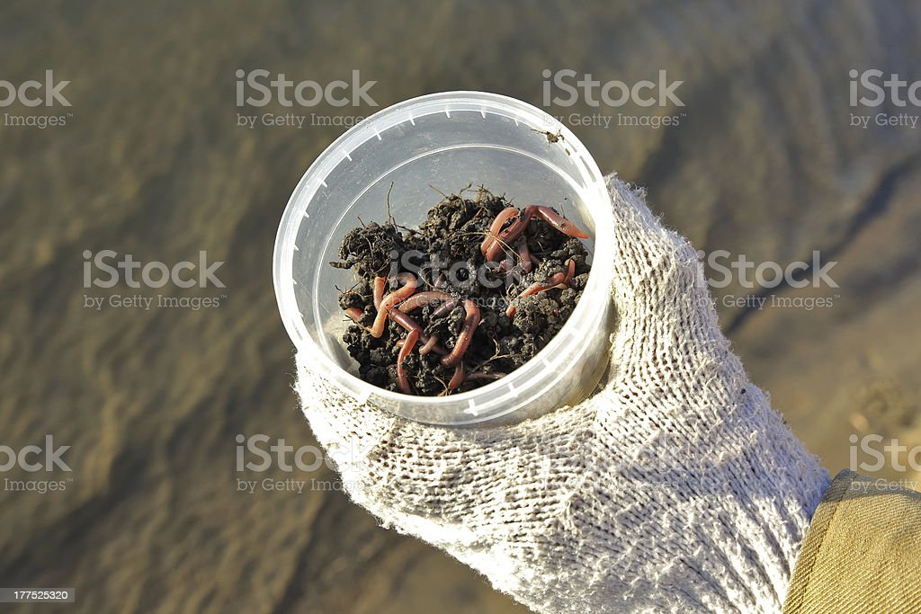 Worms in tin royalty-free stock photo